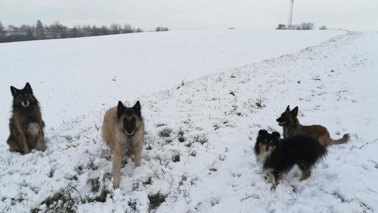 Pension canine au bounty, ambérieux en dombes.