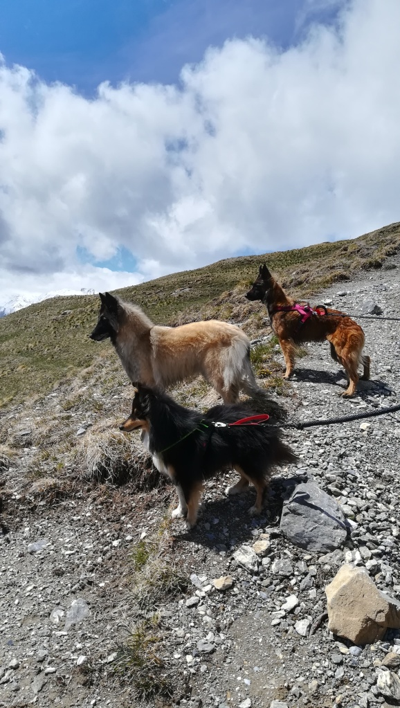 Balade canine au bounty, ambérieux en dombes.
